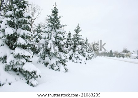 Seasonal, winter theme: snow covered street, trees and houses