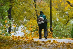 Seasonal work by city utilities in the park. A worker with a motorized backpack blower blows fallen leaves off a park path.