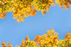 Seasonal Yellow And Green Autum Trees - Blue Sky In Background - Angled View From Bottom To The Top