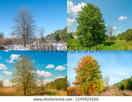 Seasons 4 seasons. View of the pear tree on the edge of the forest near the meadow #1249424266