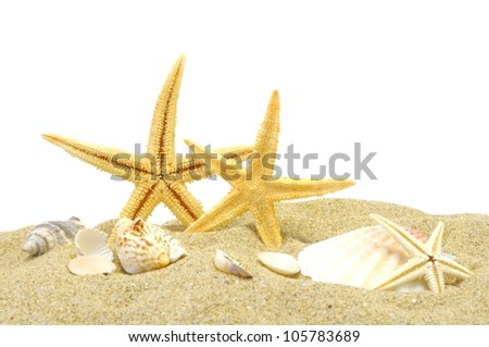 seastar and sand bank isolated on white background