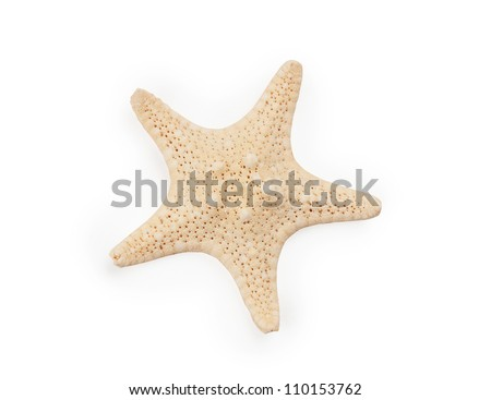 Seastar isolated on white background