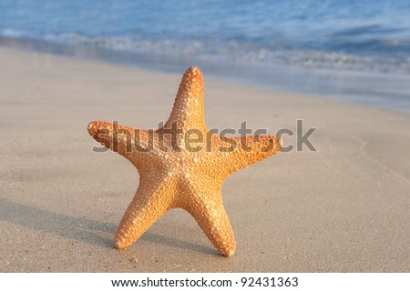 seastar sitting on beach