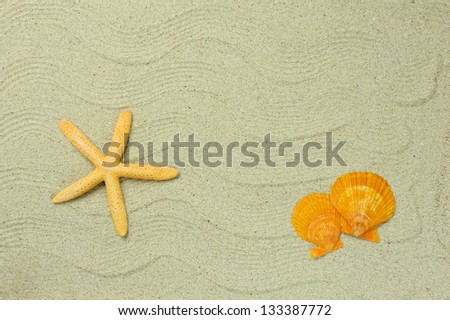 seastars sitting on beach