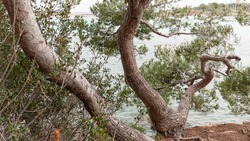 Seaview through the green tree