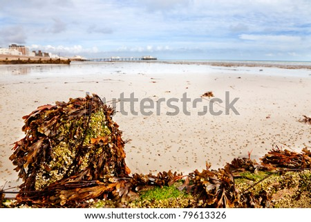 Seaweed and barnacles on a breakwater at low tide. Wormcasts on the sand & Worthing pier in the background
