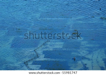 Seaweed farm in the ocean, Nusa Dua, Bali, Indonesia.
