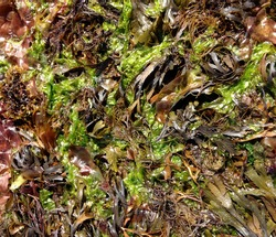 Seaweed multicolored abstract views upclose
