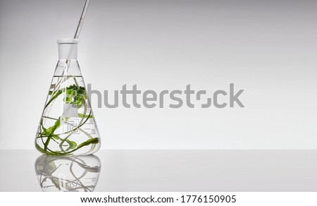Seaweed superfoods in a test tube of glass on a white background.