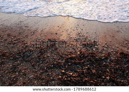 Seaweeds and stones in sandy beach Stok fotoğraf ©