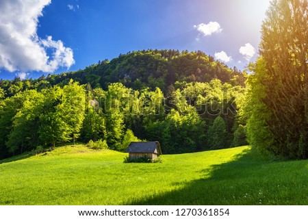 Secluded cabin in the woods. Mountain Log Cabin surrounded by trees and grass.