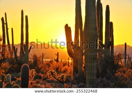 second sunset at saguaro...