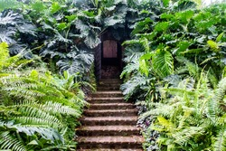 Secret doors with stone stairs surrounded by dense fern and monstera (Monstera deliciosa) green leaves, hidden entrance to the bunker in Fort Canning Park, Singapore.