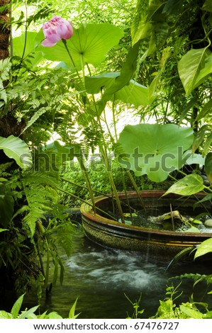 Secret garden, flowing water, lotus flower and plants.