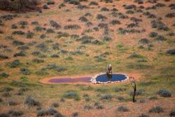 Secretarybird (Sagitarius serpentarius), in the waterhole, Kieliekrankie Wilderness Camp, Kgalagadi Transfrontier Park, Kalahari desert, South Africa.