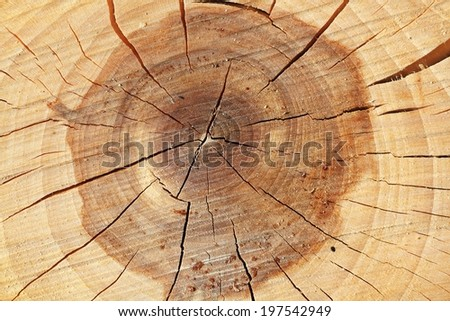 Sectional view of tree - structure of wood