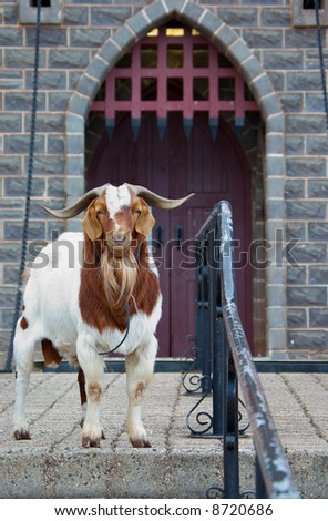 security problems  this castle is guarded by a rather unfriendly goat - stock photo