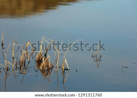 Sedge grasses in blue water, Lily Tarn, Loughrigg fell #1291311760