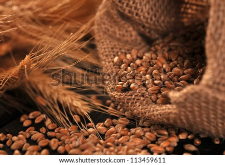 Seed and ears of cereal