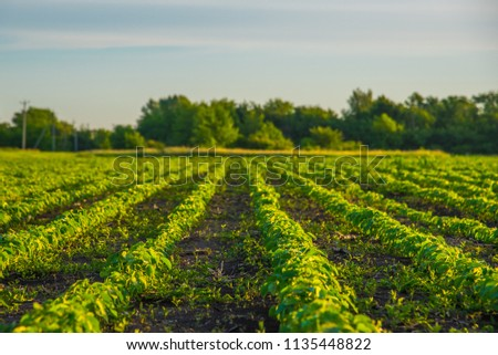 Seed beds on the field #1135448822