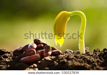 Seed for planting and sprout grow over back soil with sunlight