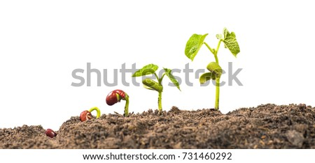 seed germination process isolate on white background #731460292