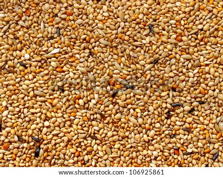 Seed mixture background. Pet food for birds. (finches)