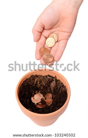 Seed Money. Pennies in the process of being planted in a small flower pot. Isolated on white.