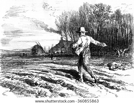 Seed on the fly, vintage engraved illustration. Magasin Pittoresque 1857.