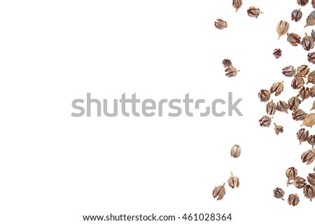 Seed on white background #461028364