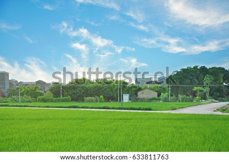 Seedings of cereal crops in the farm . Beautiful natural background in the morning. Beautiful green field in the village, Xinhui Distric, Jiangmen, Guangdong, China.