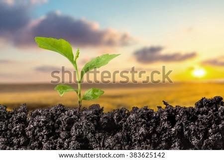 Seedling. #383625142