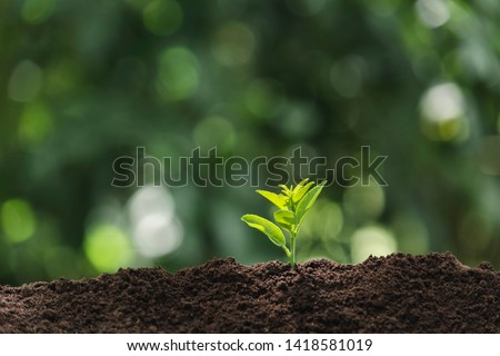 A young plant is growing in the dirt on a light green
