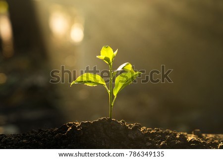 Seedling are growing in the soil with backdrop of the sunlight.Planting trees to reduce global warming.