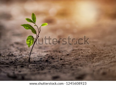 Seedling are growing soil to the morning sunlight that is shining, ecology concept of background.