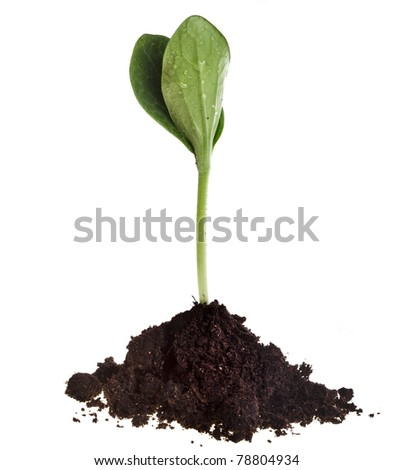 Seedling green plant in soil isolated on white