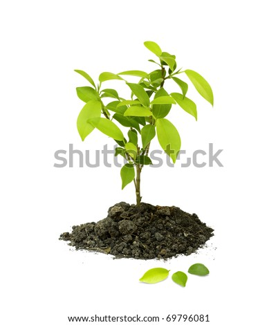 Seedling green plant on a white background, Depending on the soil pile is brown, black and fertilizers.