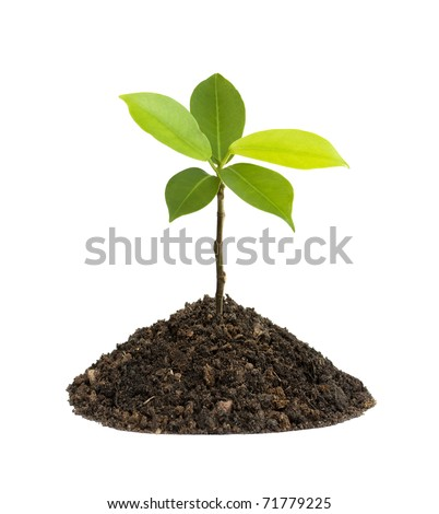 Seedling green plant on a white background. Depending on the soil pile is brown, black and fertilizers.