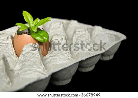 seedling in brown egg shell