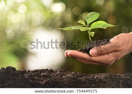 seedling in gardener hand #754649275