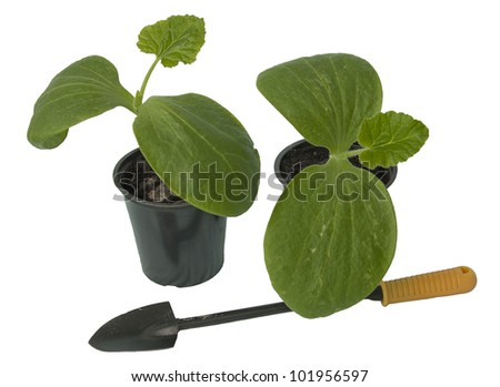 Seedling of vegetable plants with a garden trowel on white background