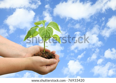 Seedling of young plant and human hands on the blue sky background