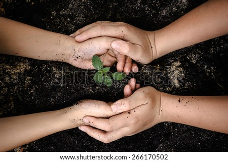 Seedling of young plant and soil in child hand