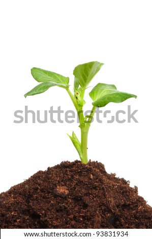 Seedling plant growing in a mound of compost against a white background
