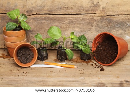 Seedling plug plants and pots on a wooden potting bench