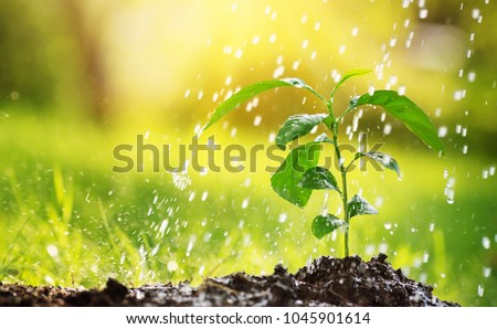 seedling watering in the soil. Water drops falling onto new sprout on sunny day in the garden in summer