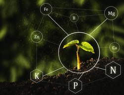 Seedlings are exuberant from abundant loamy soils. Fertilization and the role of nutrients in plant life with digital mineral nutrients icon
