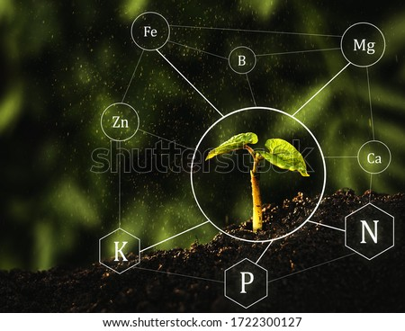 Seedlings are exuberant from abundant loamy soils. Fertilization and the role of nutrients in plant life with digital mineral nutrients icon Сток-фото ©