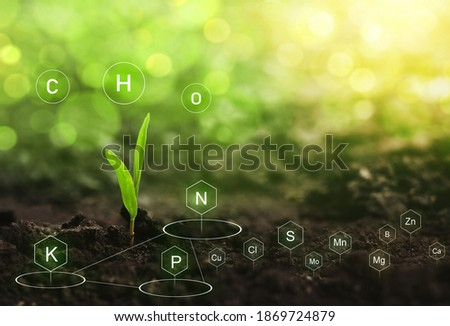 Seedlings are exuberant from abundant loamy soils. Role of nutrients in plant life. Soil with digital mineral nutrients icon.  Сток-фото ©