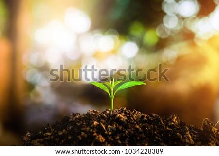 Seedlings grow in soil.Planting trees to reduce global warming. - Shutterstock ID 1034228389